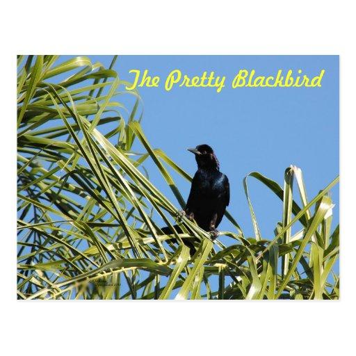The Pretty Blackbird Postcard