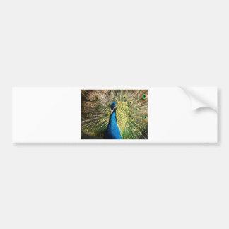 The Pretty Peacock Bumper Sticker