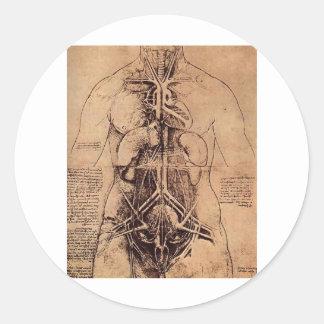 The Principle Organs and Vascular and Urino-Genita Classic Round Sticker