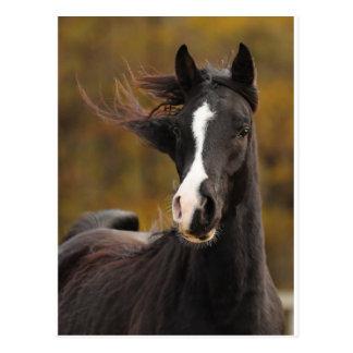 The proud Stallion Postcards
