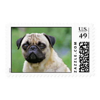 The Pug Dog Postage Stamp
