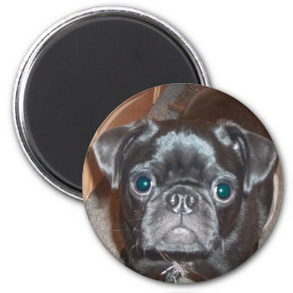 The Pug Magnets
