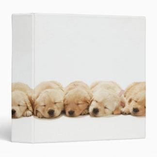 The puppies of the golden retriever binder