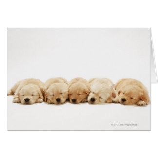 The puppies of the golden retriever greeting card