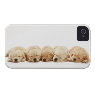 The puppies of the Golden Retriever iPhone 4 Cases