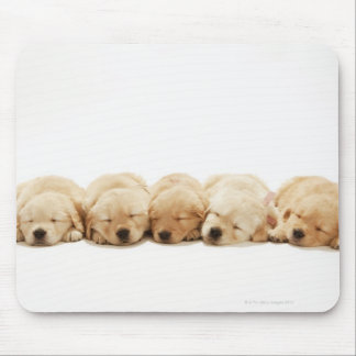 The puppies of the golden retriever mouse pad