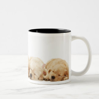 The puppies of the golden retriever mugs