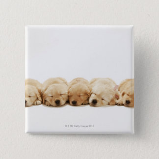 The puppies of the Golden Retriever Pinback Button