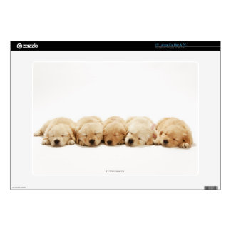 The puppies of the golden retriever skin for laptop