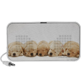 The puppies of the golden retriever PC speakers