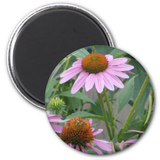 The Purple Coneflower Magnet