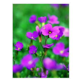 The Purple Invasion Of Spring Postcard