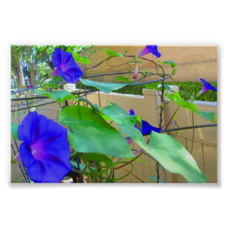 The Purple Morning Glories Poster