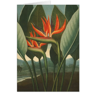 'The Queen (Bird of Paradise)' - Temple of Flora Stationery Note Card