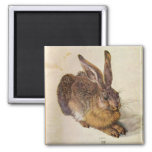 THE RABBIT ( Young Hare ) 2 Inch Square Magnet