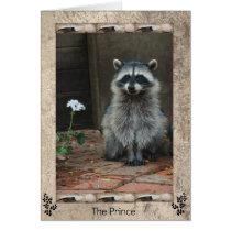 The Raccoon Prince