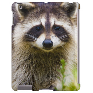 The raccoon, Procyon lotor, is a widespread, 3
