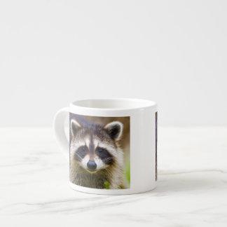 The raccoon, Procyon lotor, is a widespread, 3 Espresso Cup