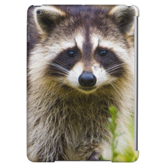 The raccoon, Procyon lotor, is a widespread, 3 iPad Air Cover