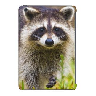The raccoon, Procyon lotor, is a widespread, 3 iPad Mini Case