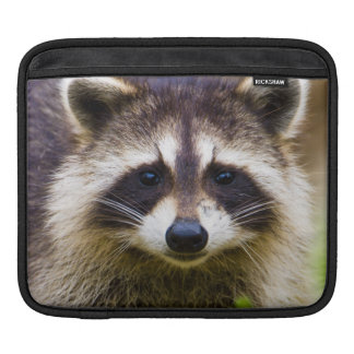 The raccoon, Procyon lotor, is a widespread, 3 Sleeve For iPads