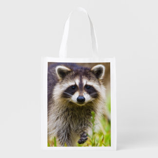 The raccoon, Procyon lotor, is a widespread, 3 Reusable Grocery Bag