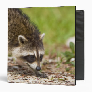 The raccoon, Procyon lotor, is a widespread, 4 Binder