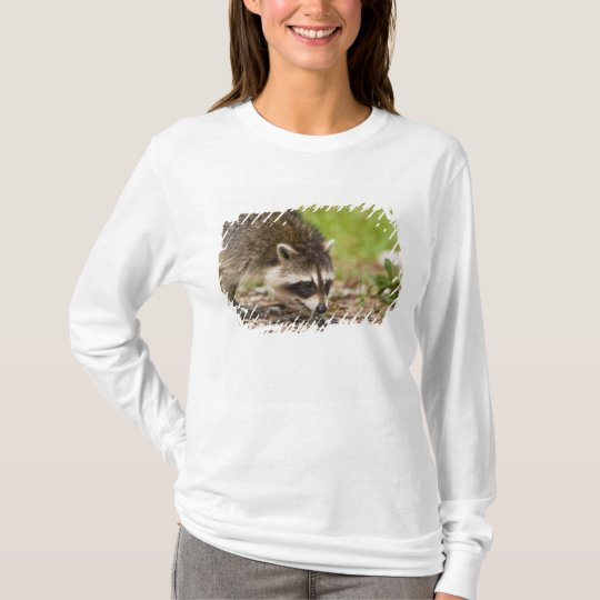 The raccoon, Procyon lotor, is a widespread, 4 T-Shirt