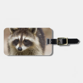 The raccoon, Procyon lotor, is a widespread, Bag Tag