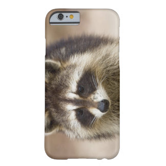 The raccoon, Procyon lotor, is a widespread, Barely There iPhone 6 Case