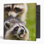 The raccoon, Procyon lotor, is a widespread, Binders