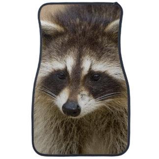 The raccoon, Procyon lotor, is a widespread, Car Floor Mat