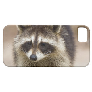 The raccoon, Procyon lotor, is a widespread, iPhone 5 Cover