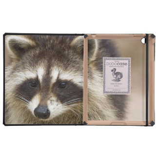 The raccoon, Procyon lotor, is a widespread, Cases For iPad