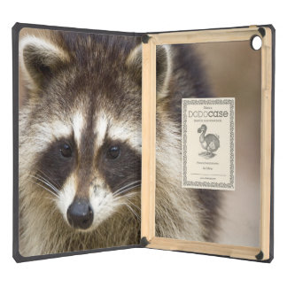 The raccoon, Procyon lotor, is a widespread, Cover For iPad Air
