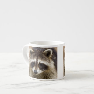 The raccoon, Procyon lotor, is a widespread, Espresso Cup