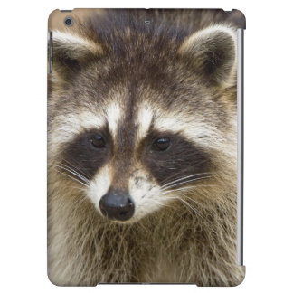 The raccoon, Procyon lotor, is a widespread, iPad Air Case