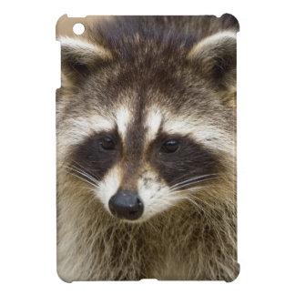 The raccoon, Procyon lotor, is a widespread, iPad Mini Case