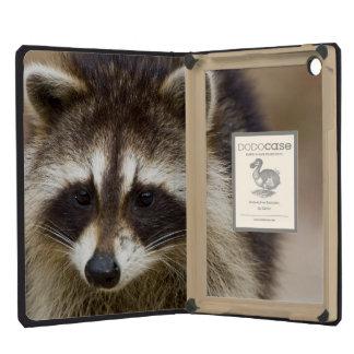 The raccoon, Procyon lotor, is a widespread, iPad Mini Retina Cases