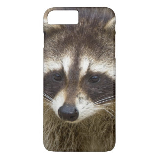 The raccoon, Procyon lotor, is a widespread, iPhone 8 Plus/7 Plus Case