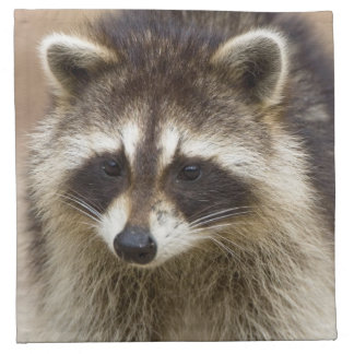The raccoon, Procyon lotor, is a widespread, Napkin