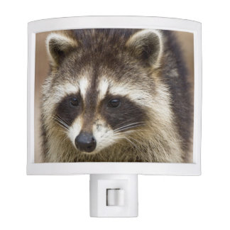 The raccoon, Procyon lotor, is a widespread, Night Light