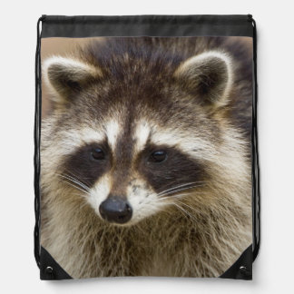 The raccoon, Procyon lotor, is a widespread, Drawstring Backpack