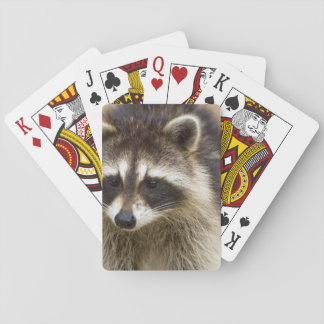 The raccoon, Procyon lotor, is a widespread, Playing Cards