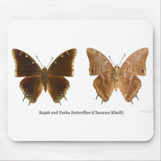 The Rajah and Pasha Butterflies Charaxes Kheili Mouse Pads