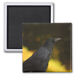 the raven 2 inch square magnet