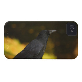 the raven iPhone 4 cases