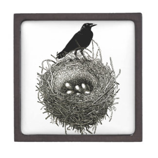 The Raven's Nest Jewelry Box