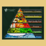 The REAL Food Pyramid Poster