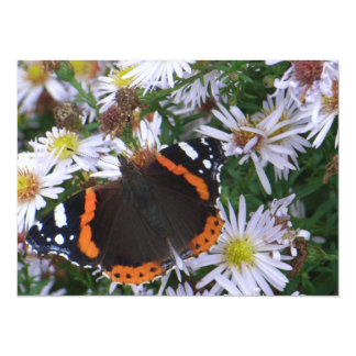 The Red Admiral Card